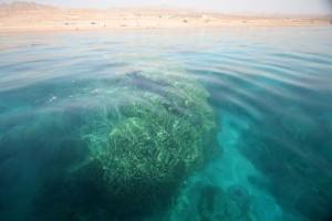 Aqaba - Kizildeniz. Mercanlar.
